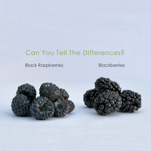 Differences between Black Raspberry and Blackberry